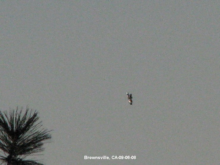 Unknown Object Photographed over Brownsville, California Brownsvilleca