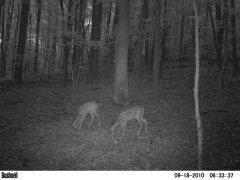 Beam - Deer Cam, Maryland