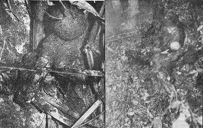 The Laredo UFO crash site photograph with the 'Tomato Man' depicted in the left frame