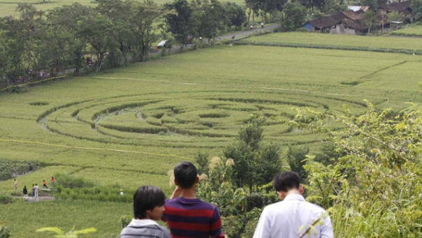 Tribunnews.com / Hasan Sakri Ghazali -The work of aliens? Indonesia's first crop circle has left many wondering -- but scientists remain skeptical.