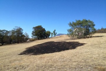 PHOTO: A burnt circle of grass where a bright light reportedly fell from the sky and started a small fire. (ABC News: Fiona Blackwood)