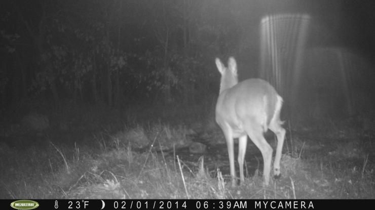 Nelson, Missouri Trailcam Picture