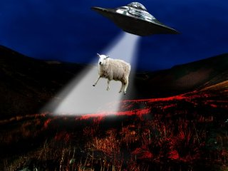A sheep being abducted by aliens (picture posed by models)