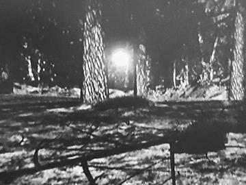 Photo taken in 1980 at Rendlesham Forest