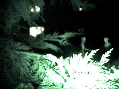Photograph of Alien