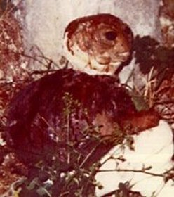 Alleged photographs of alien humanoid beings