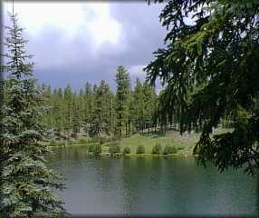 Apache Sitgreaves National Forest